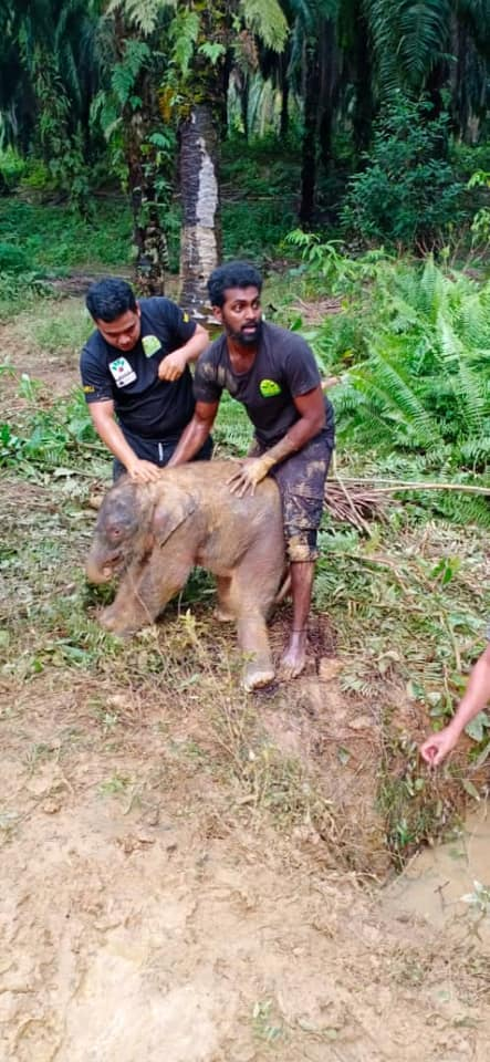 baby elephant rescued by wildlife rescue unit