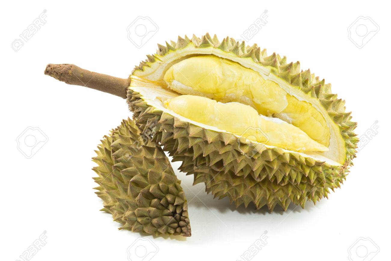 musang king will be planted in Tenom under Sabah government MESEJ programme. The king of king of fruit is usually high price. Yield from one tree can contribute up to RM5,000 to owner.