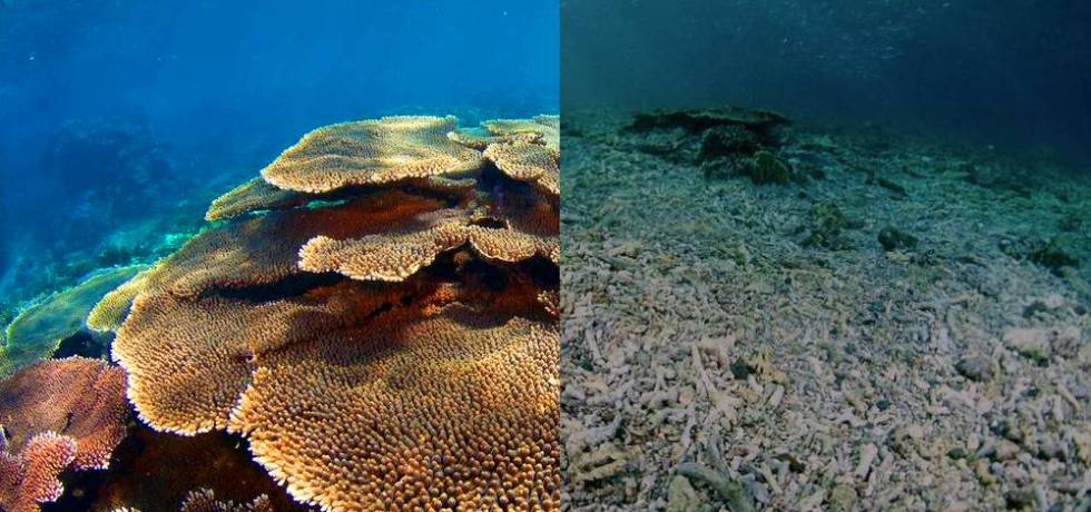 Details of the pictures provided: 1) Image file: PR_1 Caption: Coral reefs before and after destruction (these photos were not taken at the site and serve as illustration purposes only). Credit: © Eric Madeja / WWF-Malaysia