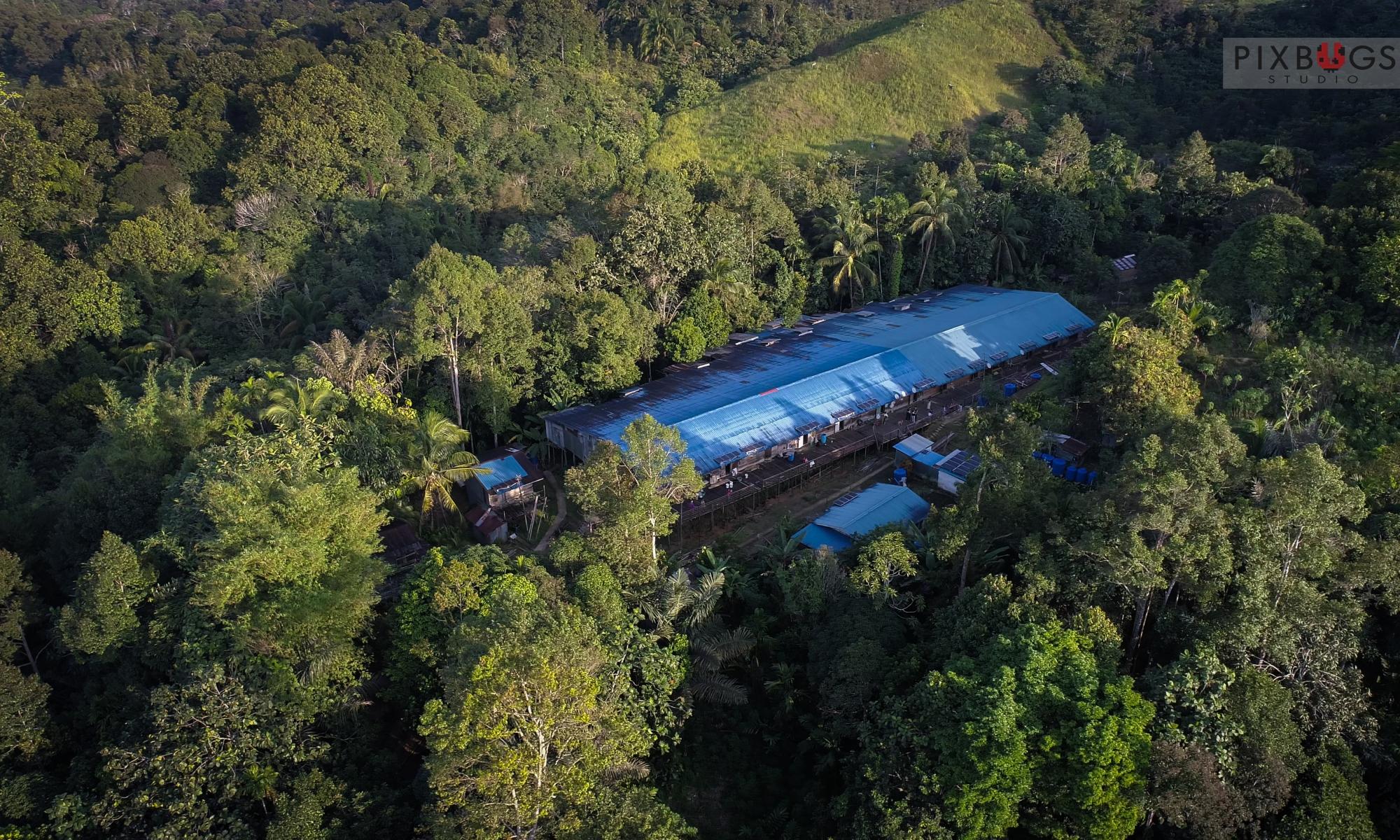 Sarawak Orangutans Conservation-WWF